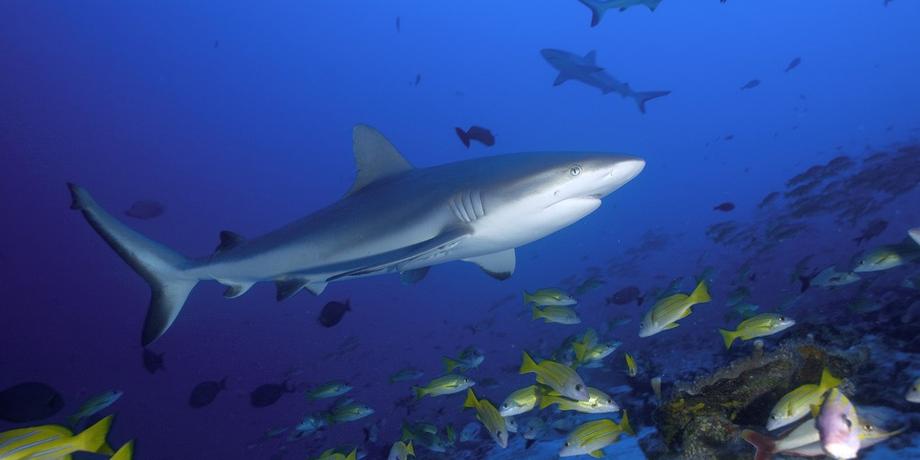 haien-schwimmen